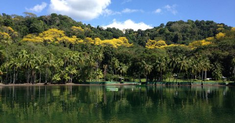 Corcovado Rainforest Experience